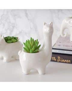 Succulent Plant in Llama Pot by Torre & Tagus