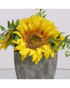 Sunflowers in Small Pot