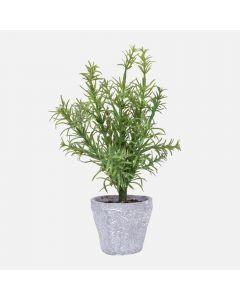 Plante de romarin«Provence»en pot par Torre & Tagus