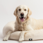 Lit apaisant pour chiens