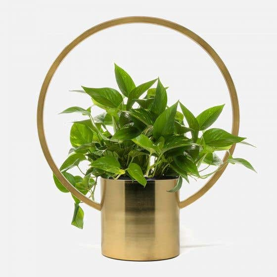 Gold Hanging Planter by Natural Living