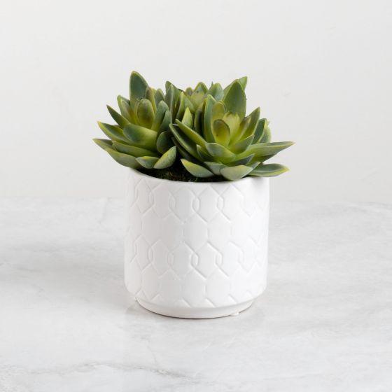 Mini plante agave en pot