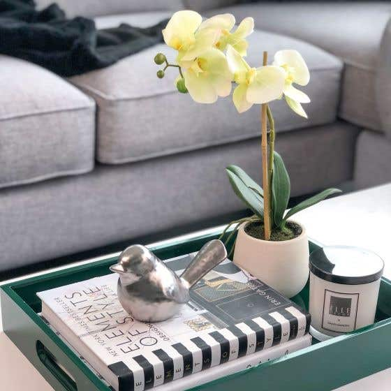 Phalaenopsis Potted Orchid by Torre & Tagus