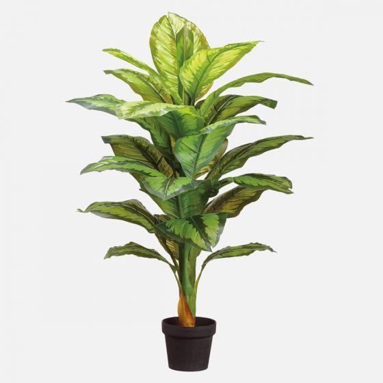 """Dieffenbachia Plant in Pot - 40"""""""